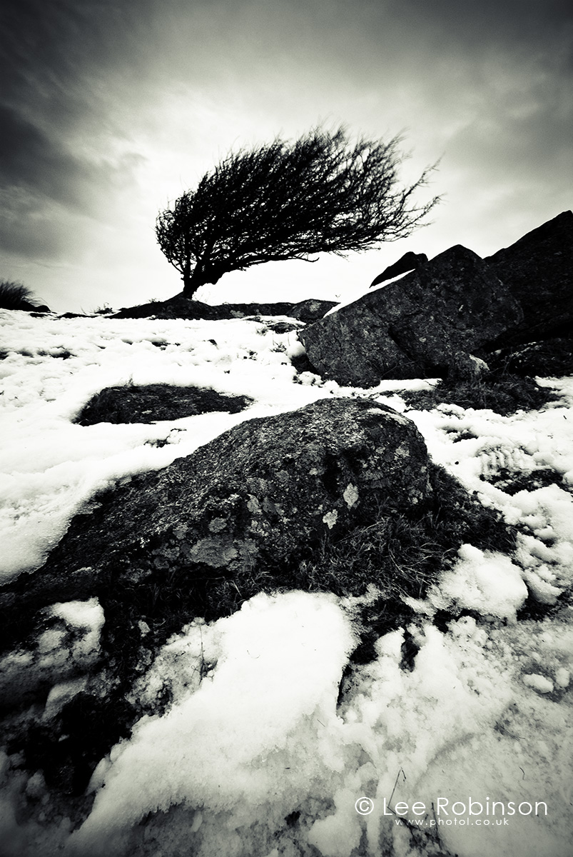 Black and white photograph of snow and tree, cornwall, england
